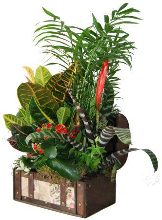 Baul de plantas