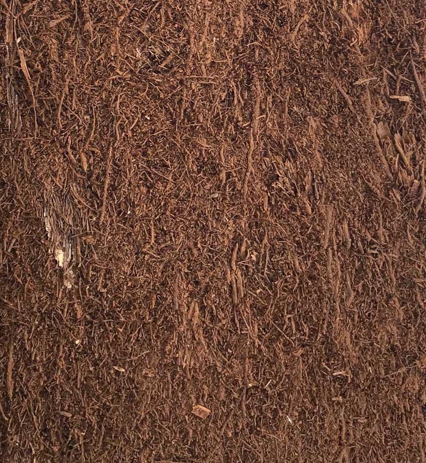 Fernwood Tree Fern plancha 15 x 15 x 2,5 cm